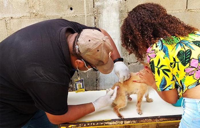 Prefeitura de Itaperuna realiza vacinação antirrábica em mais de 7.000 animais durante campanha